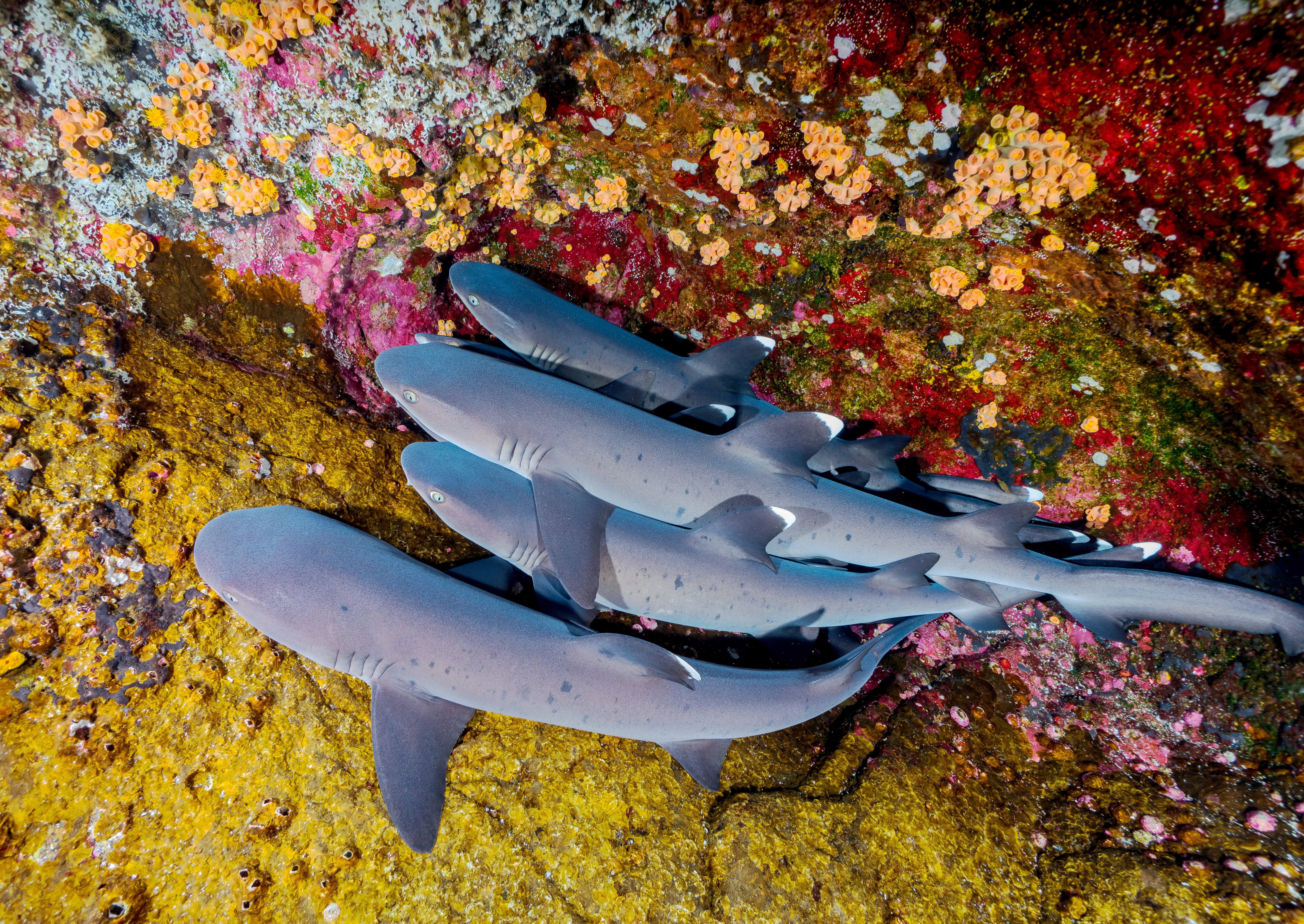 Sharks basking in Mexico